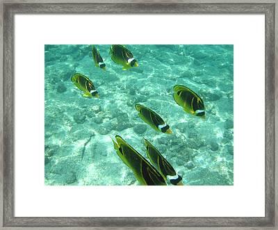 Incoming Framed Print by Karen Nicholson