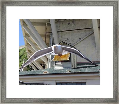 Incoming Seagull Framed Print