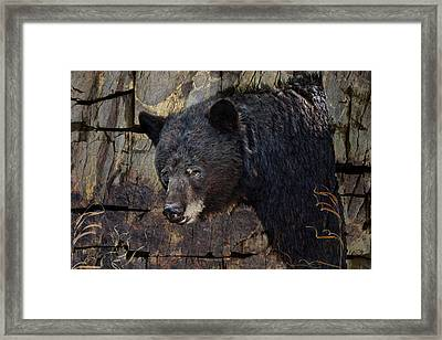 Inconspicuous Bear Framed Print