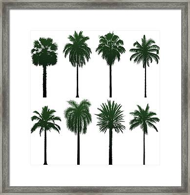 Incredibly Detailed Palm Trees Framed Print by Leontura