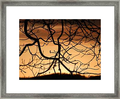 Incredulity Framed Print by Nicholas Novello