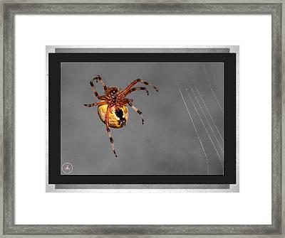 Incy Wincy Framed Print by Christine Nunes