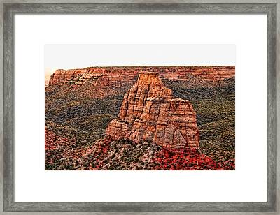 Independence Pink Framed Print by Sheila Latta