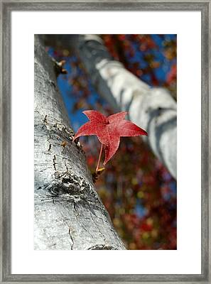 Independent Growth Framed Print by Jean Booth