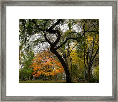 Independent Trees Framed Print