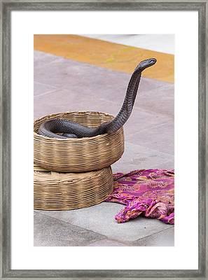 India, Rajasthan, Jaipur, Snake Framed Print by Emily Wilson