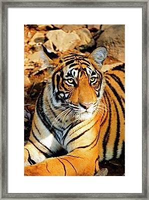 India, Sawai Madhopur, Ranthambore Framed Print by Miva Stock