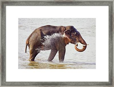 Indian Asian Elephant In The River Framed Print by Jagdeep Rajput