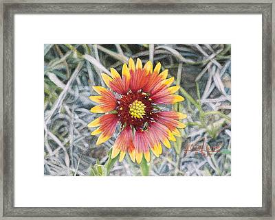 Indian Blanket Framed Print