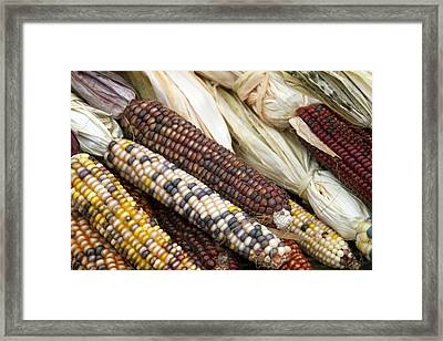 Indian Corn 2 Framed Print by Rebecca Cozart