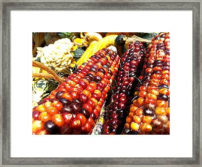 Framed Print featuring the photograph Indian Corn by Caryl J Bohn
