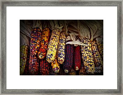 Indian Corn Framed Print by Elena Elisseeva