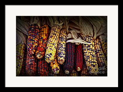 Corn Kernel Framed Prints