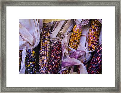 Indian Corn Harvest Framed Print by Garry Gay