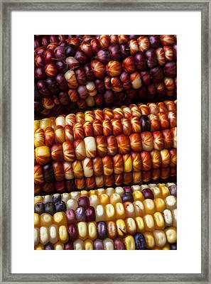 Indian Corn Harvest Time Framed Print by Garry Gay