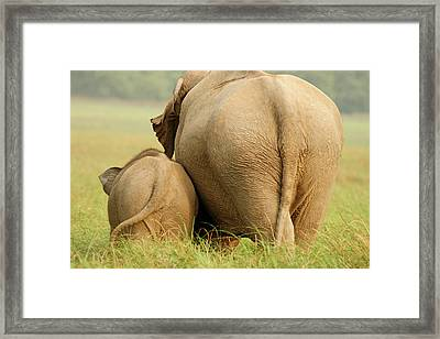 Indian Elephant And Young,corbett Framed Print by Jagdeep Rajput