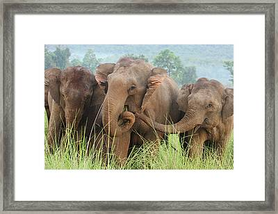 Indian Elephants Feeding,corbett Framed Print by Jagdeep Rajput