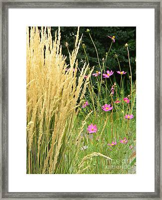 Indian Grass And Wild Flowers Framed Print