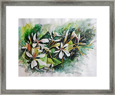 Framed Print featuring the painting New Orleans Indian Hawthorne by Michael Hoard