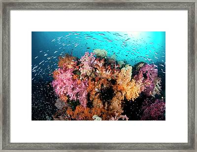 Indian Ocean, Indonesia, Papua, Raja Framed Print