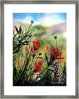 Indian Paint Brush Framed Print by Barbara Jewell