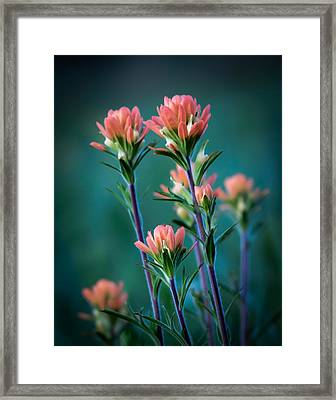 Indian Paintbrush At Dawn Framed Print by James Barber