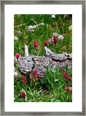 Framed Print featuring the photograph Indian Paintbrush by Ronda Kimbrow