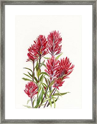 Indian Paintbrush Framed Print by Sharon Freeman