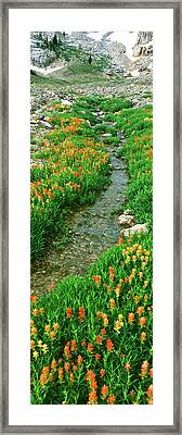 Indian Paintbrush Wildflowers Framed Print by Panoramic Images