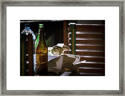 Indian Palm Squirrel Scavenging Framed Print by Paul Williams