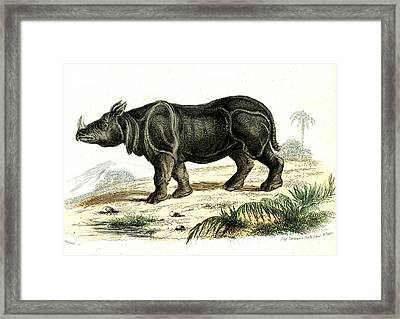 Indian Rhinoceros Framed Print