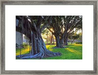 Indian Sunset Framed Print by Iryna Goodall