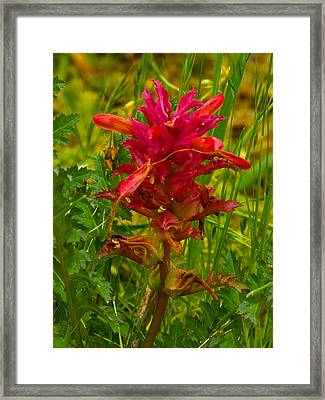 Indian Warrior In Park Sierra-ca Framed Print by Ruth Hager