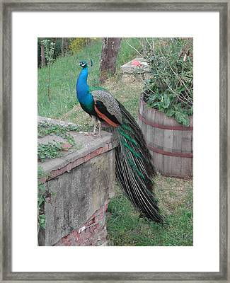 Indie At Home Framed Print by Dorothy Berry-Lound
