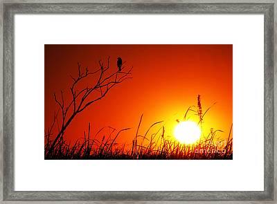Indifferent Framed Print