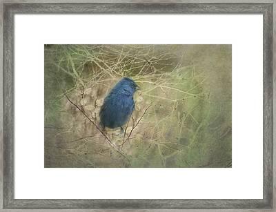 Indigo Blue Framed Print