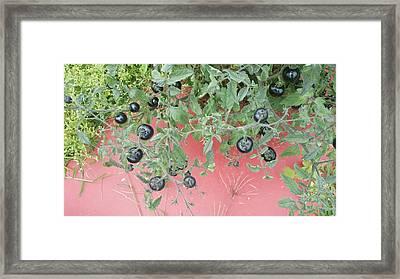 Indigo Tomato Reflections Framed Print