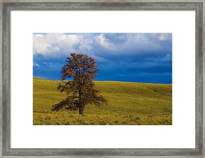 Individuality 2 Framed Print