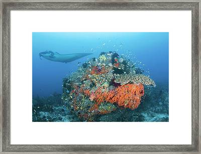 Indonesia, Papua, Raja Ampat, Dampier Framed Print by Jaynes Gallery