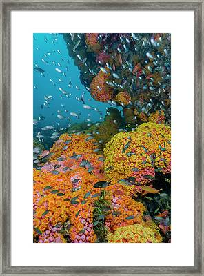 Indonesia, West Papua, Triton Bay Framed Print