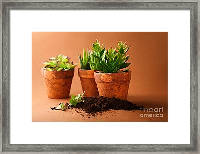 Indoor Plant Framed Print by Boon Mee