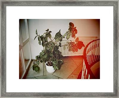 Indoor Plant Standing In The Hallway Framed Print
