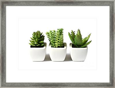 Indoor Plants Framed Print by Boon Mee