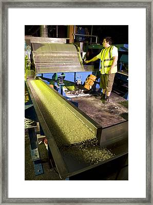 Industrial Adhesive Manufacturing Framed Print by Science Photo Library