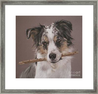 Indy - Border Collie Framed Print by Joanne Simpson