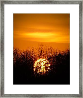 Inferno In The Trees Framed Print