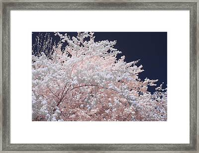 Inferred Spring Framed Print