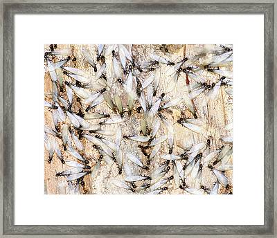 Infested Framed Print by Pam Garcia