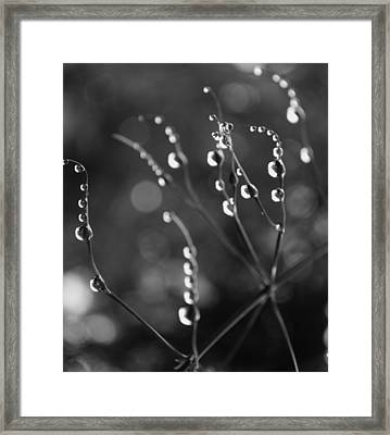 Infinetely Patient Framed Print by Tara Miller