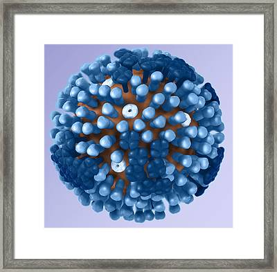 Influenza Virus, 3d Model Framed Print by Science Source